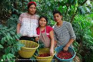 10. Huehuetenango Family